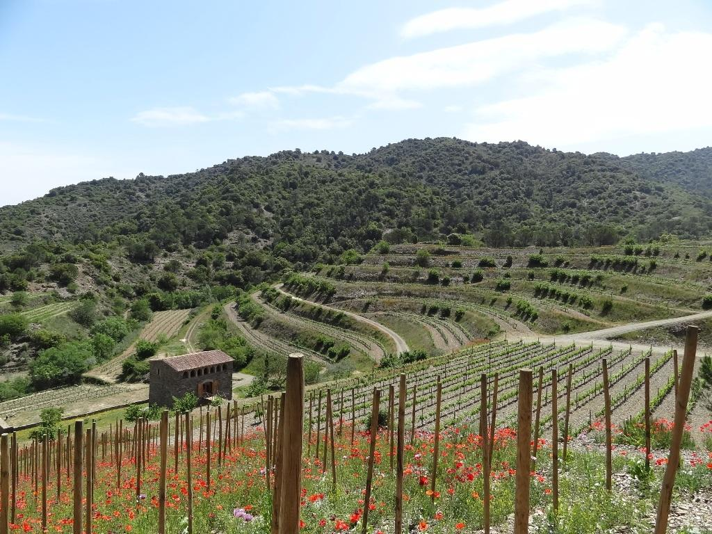 vineyardpriorat.jpg