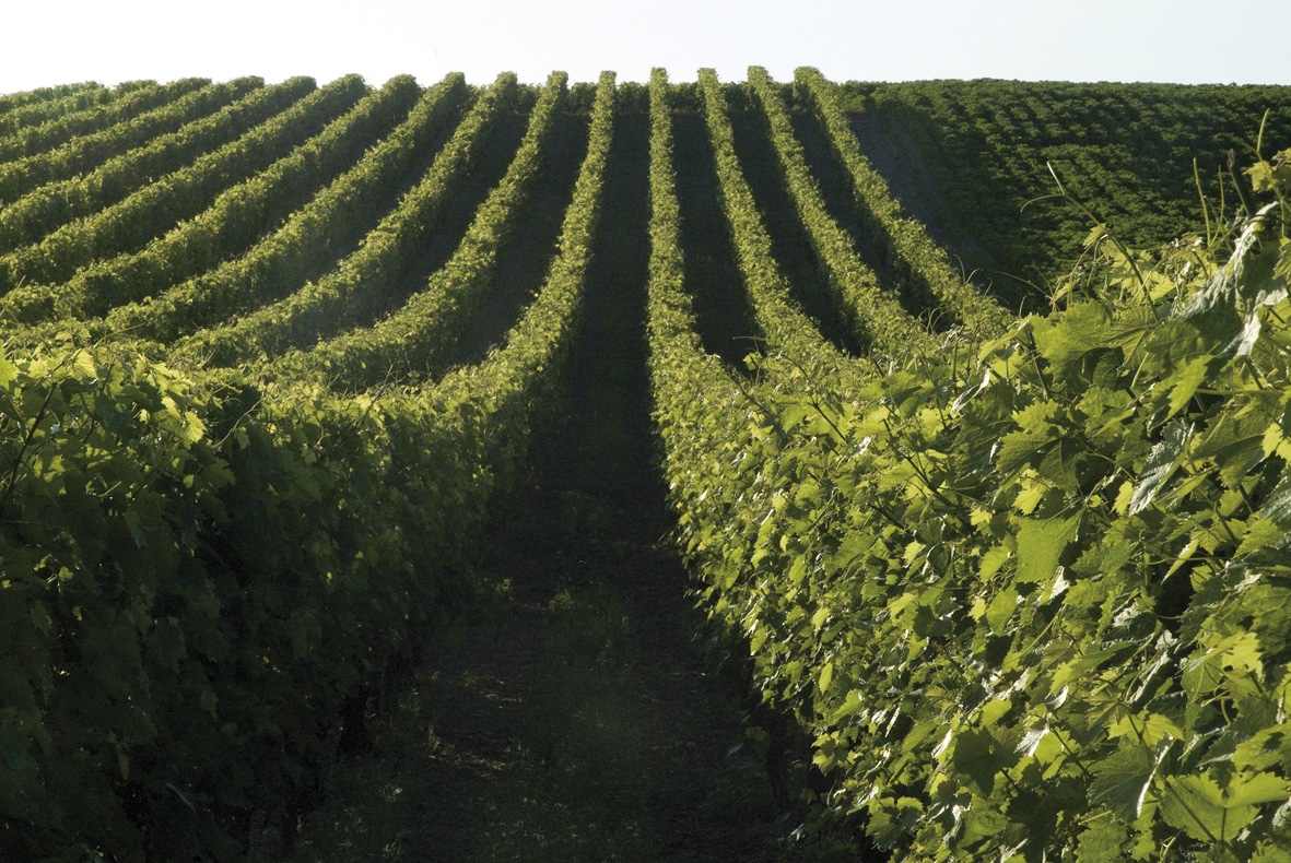 vineyardslheraud.jpg
